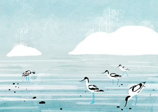 Katherine Blower, Avocets (United Kingdom, Europe)