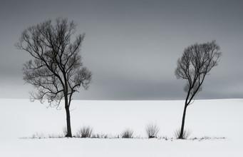 Heiko Gerlicher, Zwei Weiden (Deutschland, Europa)