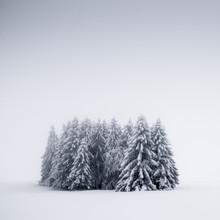 Heiko Gerlicher, Winterbäume V (Deutschland, Europa)
