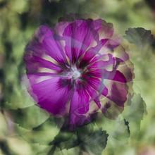 Nadja Jacke, Hibiskus Blüten Muster (Deutschland, Europa)