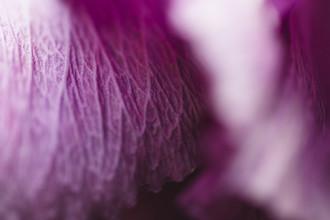 Nadja Jacke, Hibiscus petal (Germany, Europe)