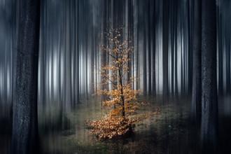 Oliver Henze, Kleines Bäumchen im dunklen Wald (Deutschland, Europa)