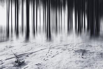 Oliver Henze, Strichcode im Wald (Deutschland, Europa)