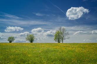 Anke Butawitsch, spring meadow (Deutschland, Europa)