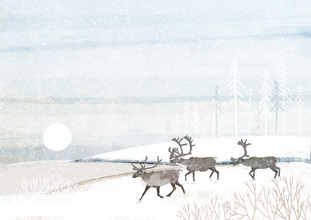 Katherine Blower, Reindeer Herd (United Kingdom, Europe)