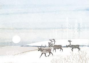 Katherine Blower, Reindeer Herd (Großbritannien, Europa)