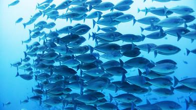 Eva Lorenbeck, Im blauen Fischschwarm (Indonesien, Asien)