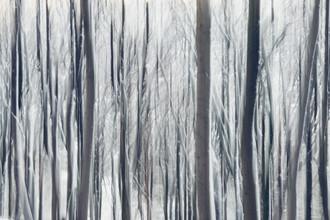 Nadja Jacke, Blurred trees with snow (Germany, Europe)
