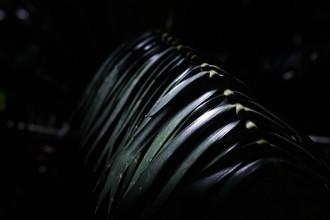 palmwedel 2 - fotokunst von Friederike Lenz
