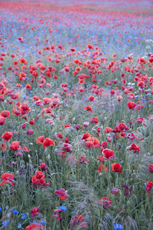 Poppy Seed Heaven - Fineart photography by Studio Na.hili