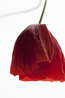 Studio Na.hili, Poppy Seed Dress (Deutschland, Europa)