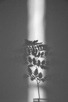 Studio Na.hili, Ray of Sunlight (Deutschland, Europa)