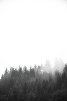Studio Na.hili, Walk through the forest (Deutschland, Europa)