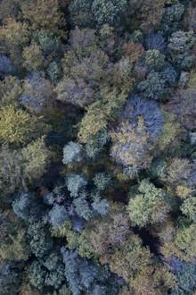 Studio Na.hili, Autumn forest from above (Schweiz, Europa)