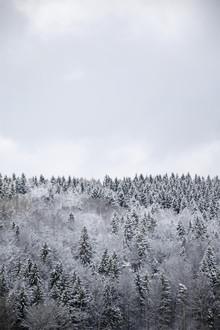 Studio Na.hili, White Winter Forest (Czech Republic, Europe)