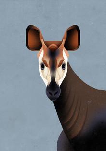 Dieter Braun, Okapi (Deutschland, Europa)