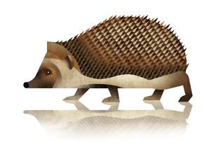 Dieter Braun, Hedgehog (Germany, Europe)