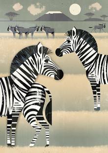 Dieter Braun, Zebras (Deutschland, Europa)