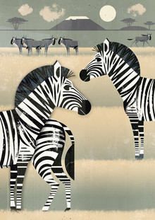 Dieter Braun, Zebras (Germany, Europe)