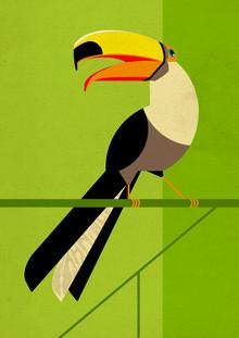 Dieter Braun, Toucan #2 (Germany, Europe)