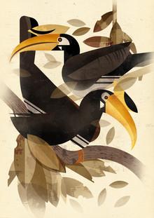 Dieter Braun, Hornbill (Germany, Europe)