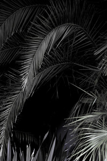 Studio Na.hili, Tropical Garden 1/5 (Indien, Asien)