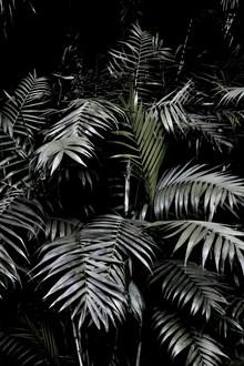 Studio Na.hili, Tropical Garden 3/5 (Indien, Asien)
