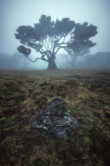 Jean Claude Castor, Madeira Lorbeerwald Fanal mit Nebel (Portugal, Europa)