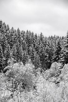 Studio Na.hili, In the forest (Tschechische Republik, Europa)
