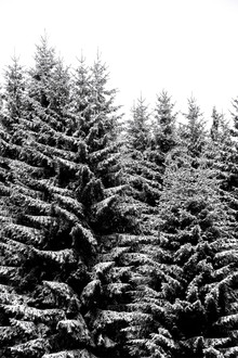 Studio Na.hili, Snowy Christmas Trees (Czech Republic, Europe)