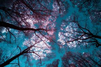 Darius Ortmann, Glowing trees (Germany, Europe)