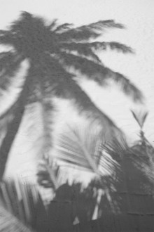 Palms on the Beach - fotokunst von Studio Na.hili