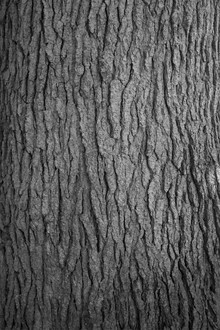 Studio Na.hili, Hug a tree (Niederlande, Europa)