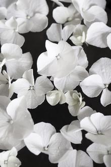Studio Na.hili, White beauty on black (Deutschland, Europa)