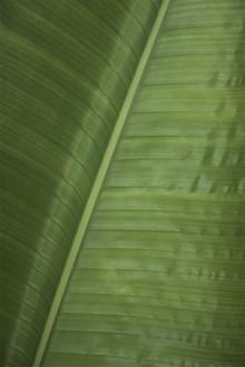 Studio Na.hili, Green Banana (Indien, Asien)