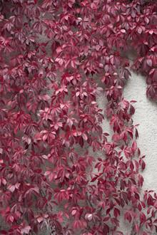 Studio Na.hili, Beauty of Autumn (Deutschland, Europa)
