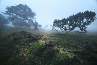 Madeira Fanal Nebelwald mit Lorbeer Bäumen - fotokunst von Jean Claude Castor