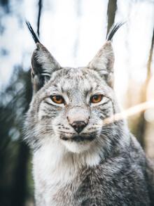 Lars Schmucker, Potrait eines Luchses im Wald (Deutschland, Europa)