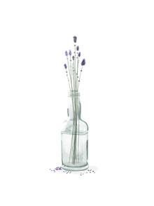 Katherine Blower, lavender (United Kingdom, Europe)