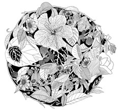 Catalina Villegas, Botanical Circle (Black and White) (Kolumbien, Lateinamerika und die Karibik)