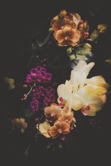 Pascal Deckarm, Flower Bouquets (, )
