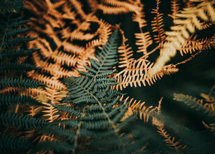 Jakub Wencek, The touch of ferns (Poland, Europe)