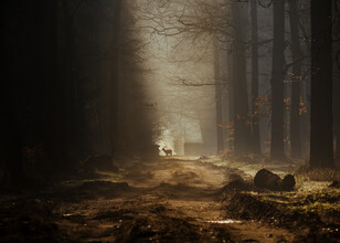 Jakub Wencek, Lonely deer (Poland, Europe)