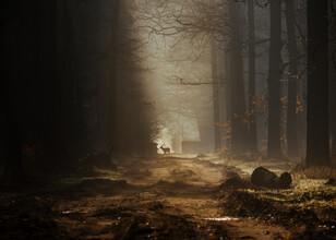 Jakub Wencek, Lonely deer (Polen, Europa)