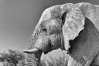 Angelika Stern, Elefanten Portrait (Namibia, Afrika)