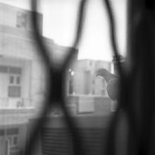 Taube - fotokunst von Shantala Fels