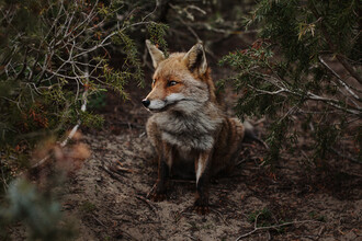 Katja Kemnitz, Reynard the Fox (Italy, Europe)