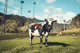 Philipp Awounou, Kuh unter Palmen (Kolumbien, Lateinamerika und die Karibik)