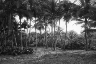 Michael Evans, The Grove (Kolumbien, Lateinamerika und die Karibik)