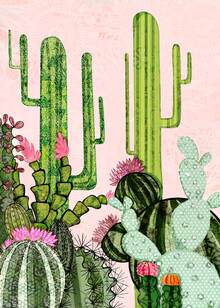 Katherine Blower, Cacti (United Kingdom, Europe)